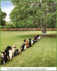 Dog queue
