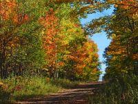 Narrow rural road