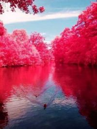 Cherry River, West Virginia..