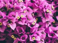 garden glowers -hard