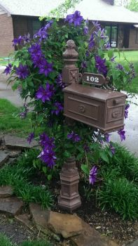 Pretty mail box