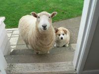 Baabara and her pet dog, Cody