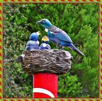 A nest of Tuis.