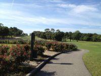 Copperhead, Palm Harbor, FL