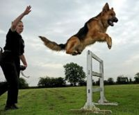 police dog for libby