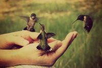 three birds in the hand