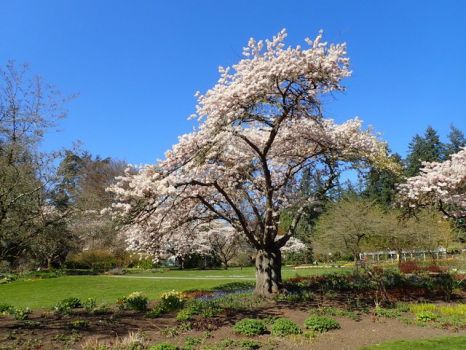 Vancouver in the spring