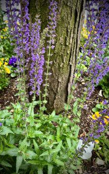 Flower Garden, NYC