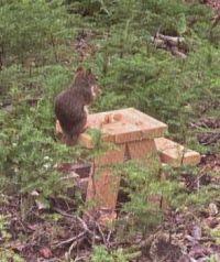 Picnic Squirrel
