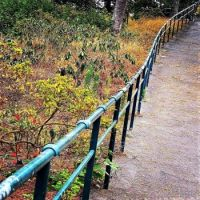 Trust your path & have faith that you are being shown the best way forward! (at Golden Gate Park)