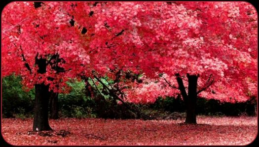 A Pinknblack Autumn Day