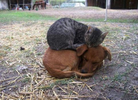 Now that's friendship..!!