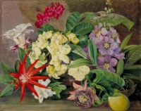 Marianne North (British, 1830–1890), Flowers and Fruit