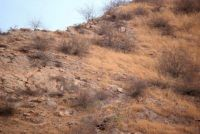 Can you find the leopard??
