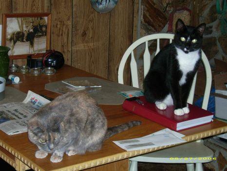 TINKER AND  OREO