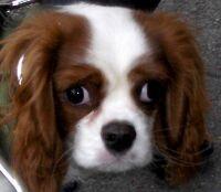 big eyed puppy