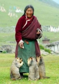 Tibetan woman feeding marmots