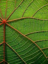 """2  ~  """"Leaf, ga dan mee....""""  ;-)"""