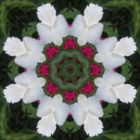 Kaleidoscope 73 white star very large