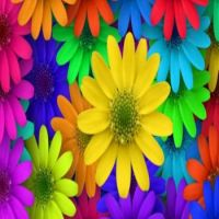 LET'S HAVE A COLORFUL DAY  (6)