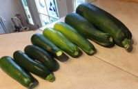 this morning's crop of zucchini