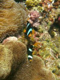 THAILAND FISH