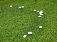 Toadstool UFO formation