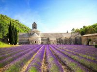 Senanque Abbey  ~  Provence, France