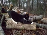 Meowthy on the wood pile