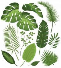 A collection of tropical leaves