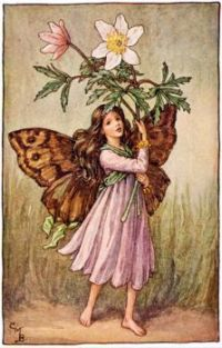 The Windflower Fairy (mini)