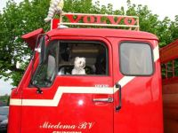 The dog watches over the truck