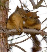2  eekhoorns