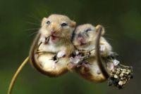 2 Hamsters in love
