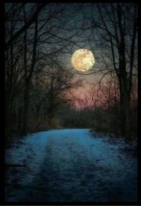 A Walk In The Moonlight