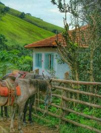 A Cottage with Horses in the Brazilian Countryside