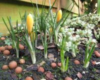 Spring in my garden???