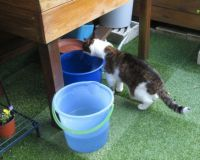 Goofie: Poor little bucket...I'll give you a hand....