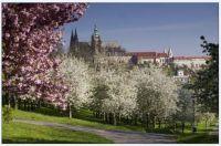 Hrad Praha_Prague