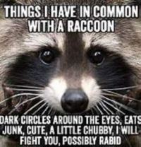 How many things we have in common with a Raccoon.