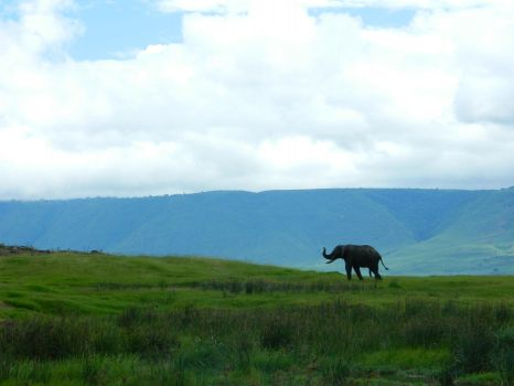 Elephant at Ngorongoro Crater