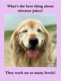 the best thing about elevator jokes