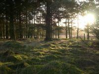 Woods near Carnwath Scotland