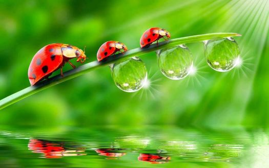 March of the Ladybirds