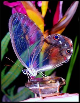 Through the wings of a butterfly