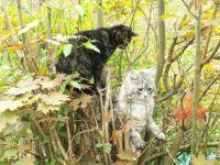 Cats climbing trees