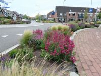 Series: The most beautiful roundabout in Winterswijk.....