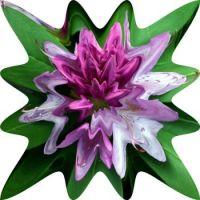 Kaleidescope flower