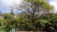 043 Bot.zahr. Funchal-Madeira
