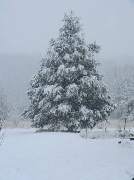 My Niece's Yard Today~Pacific, Mo.